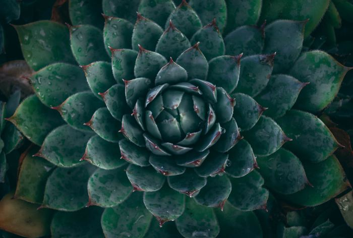how to practice self love spiritual psychotherapist